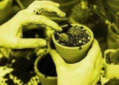 2 posibles caminos  de crecimiento para el futuro: la tecnología y la naturaleza