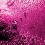 Nuestro comportamiento imita al de los peces