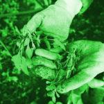 El espíritu empresarial es la jardinería